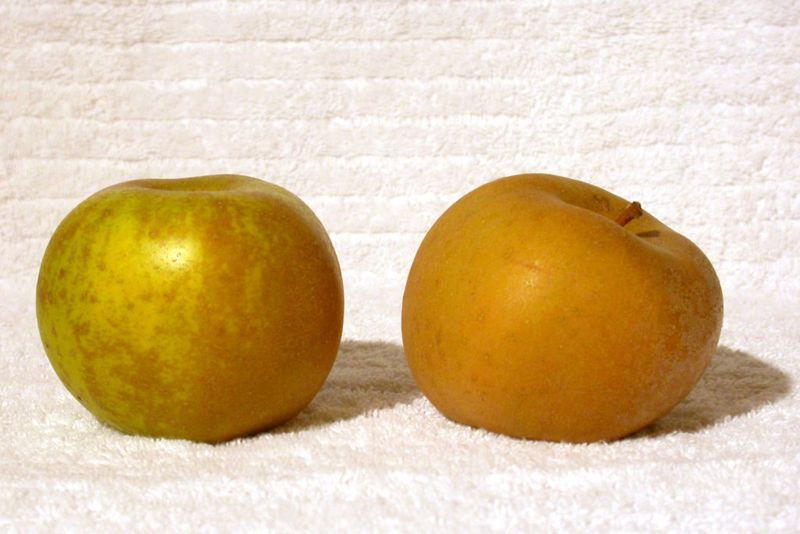 800px-golden_russet_apple.jpg
