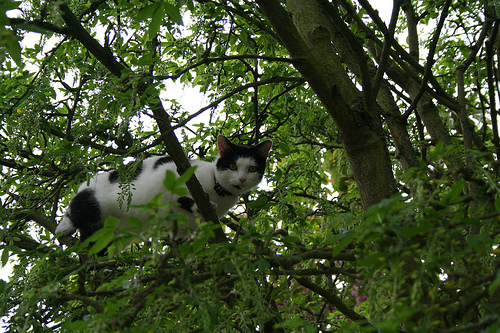 Kitteh can haz tree sit, 2?