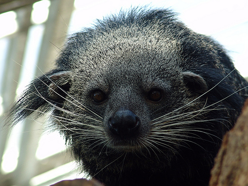 Unfortunately, not our new mascot. BEARCATS EXIST!