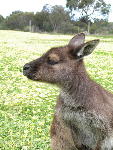 Academically Elitist Kangaroo
