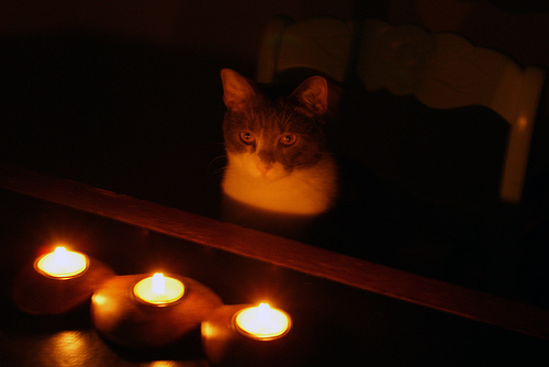This cat doesn't know that the power is out. Cat's have no concept of electricity.
