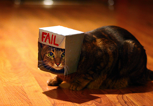 Get ur hed out of tat big box of FAIL, kitteh!