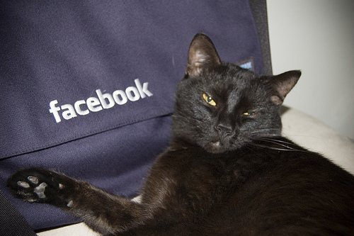 facebook kitty