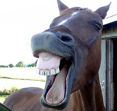 This is a funny looking horse. Try not to read too much into it.