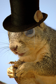 squirrelwithmonocle