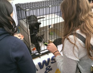 Kittens on Sproul!