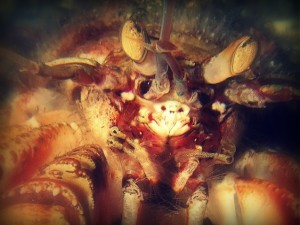Why Your Roommate Is A Hermit Crab